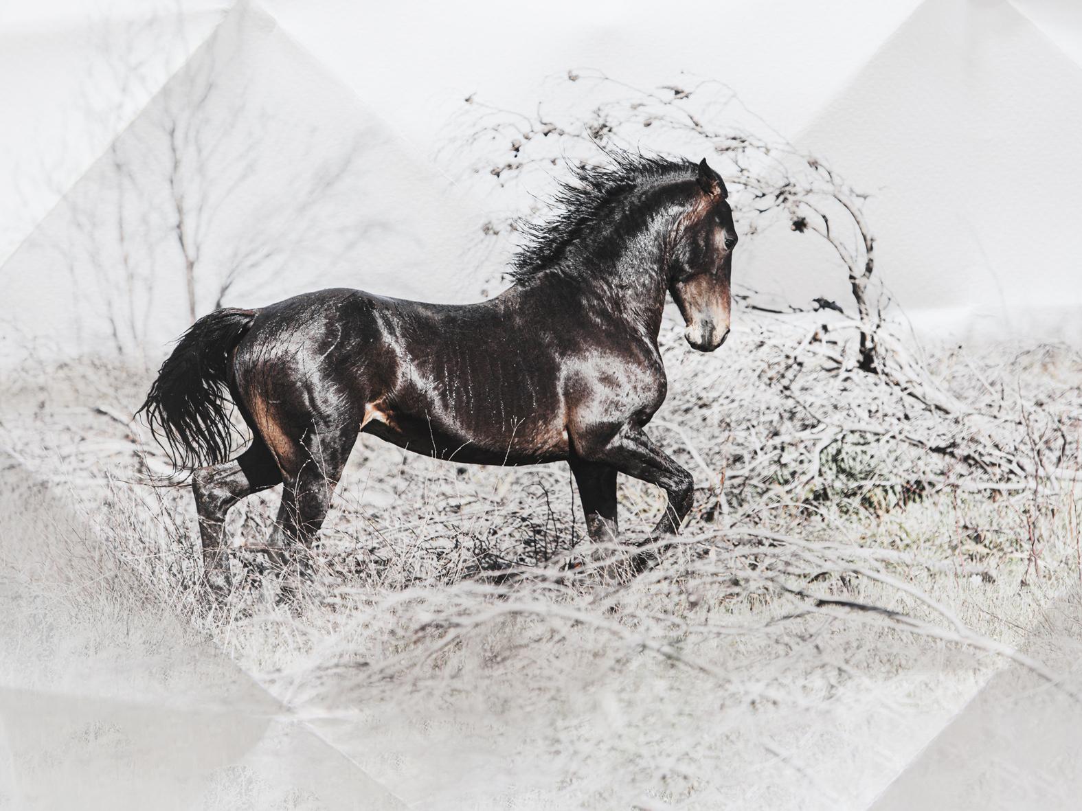 Horses11-4-3-crop-small