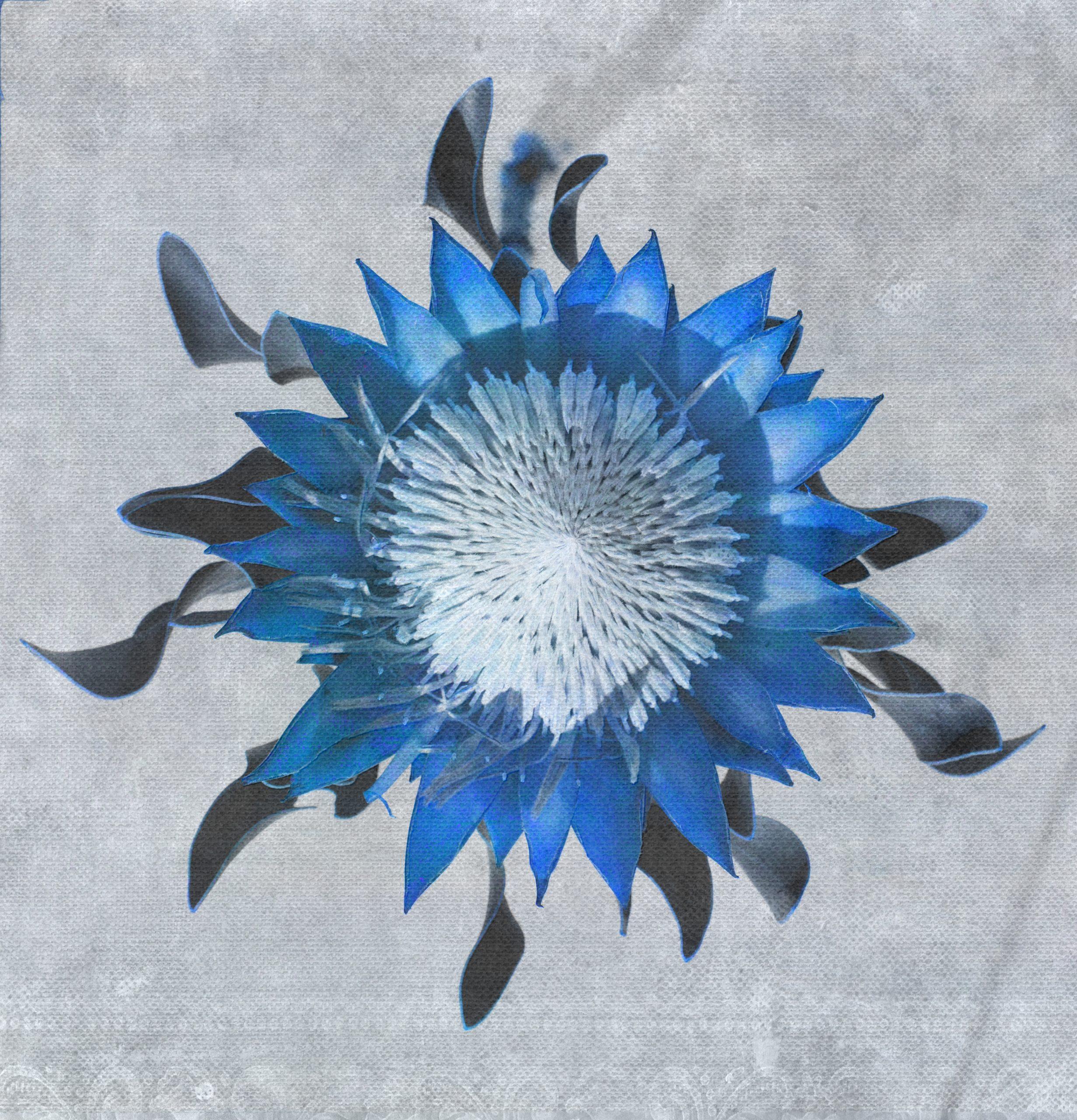 Madiba3-blue