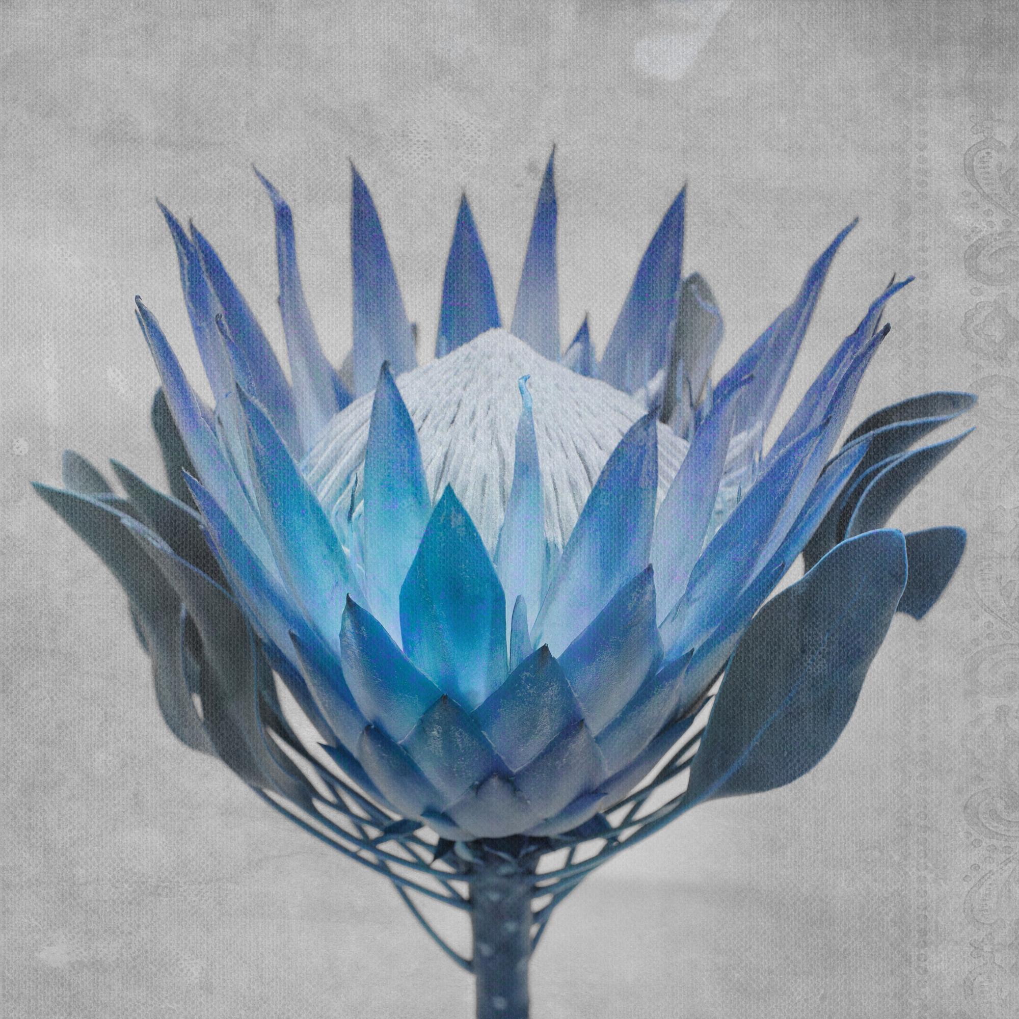 Madiba4-Blue-small
