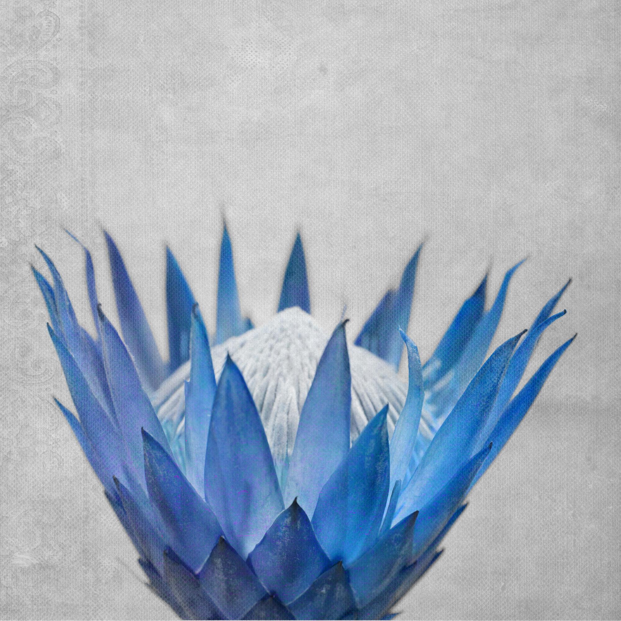 Madiba5 – Blue-small